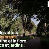 VIDEO. Avec le confinement, la biodiversité des parcs parisiens s'est fortement développée