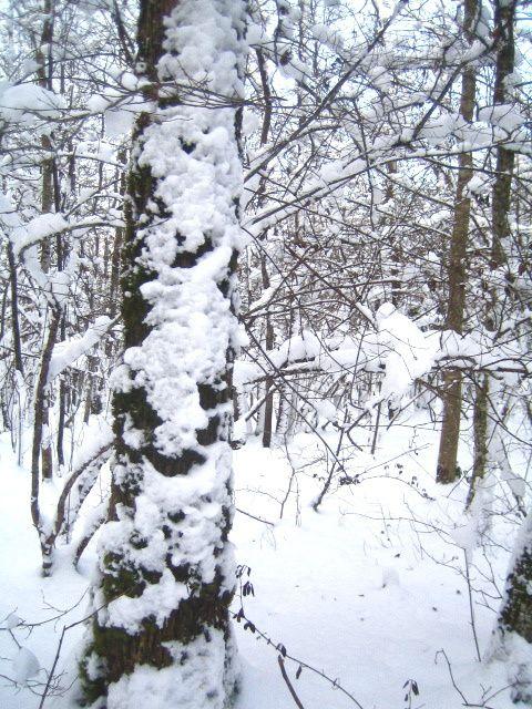 Photos prises dans mon village Saussy (Côte d'Or) ou dans la forêt de mon village La photographie est un art...