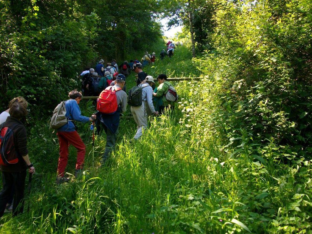 """Les marcheurs des """"12 Km"""" à Thouaré"""