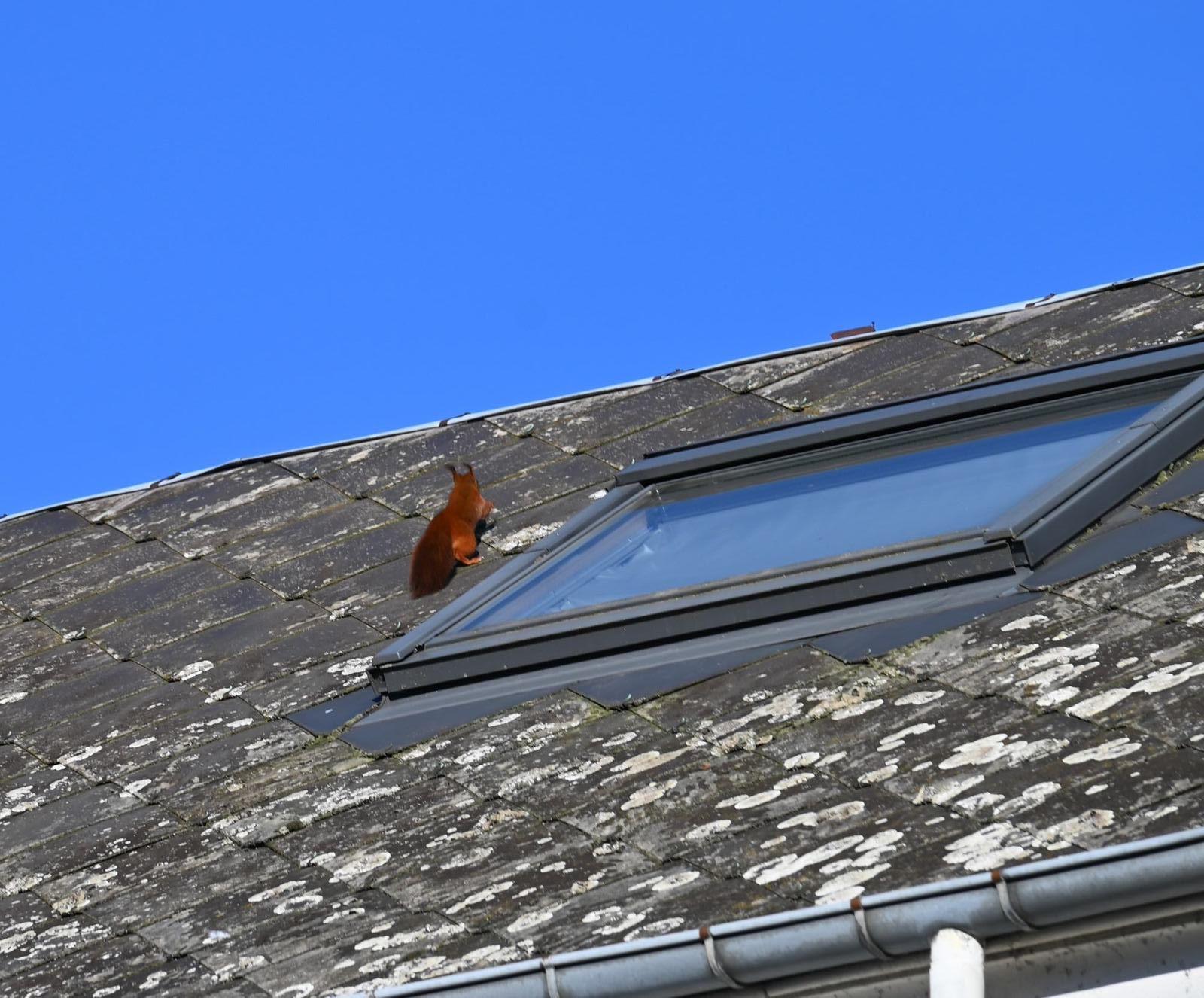 Sur le toit ...