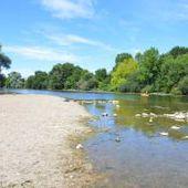 Sécurité - La baignade dans la rivière le Cher est interdite, même pour les animaux