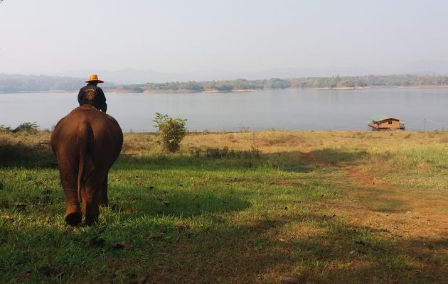 Katchanaburi - L'homme qui parlait à l'oreille des éléphants