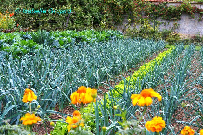 Le Potager Grand Siècle Classé Jardin Remarquable de Saint Jean de Beauregard