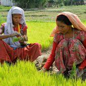 Nourrir la planète avec une agriculture 100% biologique en 2050, c'est possible