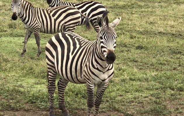 Tanzanie - Parc National de Serengeti. 2/3.