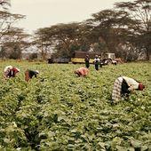 Ressources et communauté sur la Responsabilité sociale des entreprises dans les pays émergents et en développement | RSE et PED