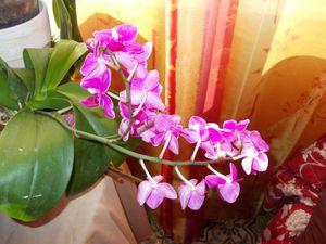 Mes orchidées en ce moment, je sais,  je vais faire rager certaines ! (sourire)