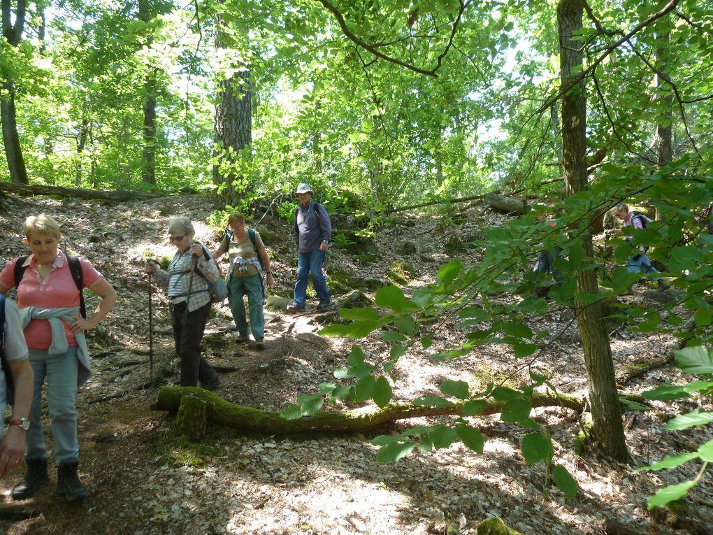 Randonnée boucle autour de Montigny-sur-Loing, 15,4 km.
