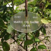 Marie de Saint-Jean