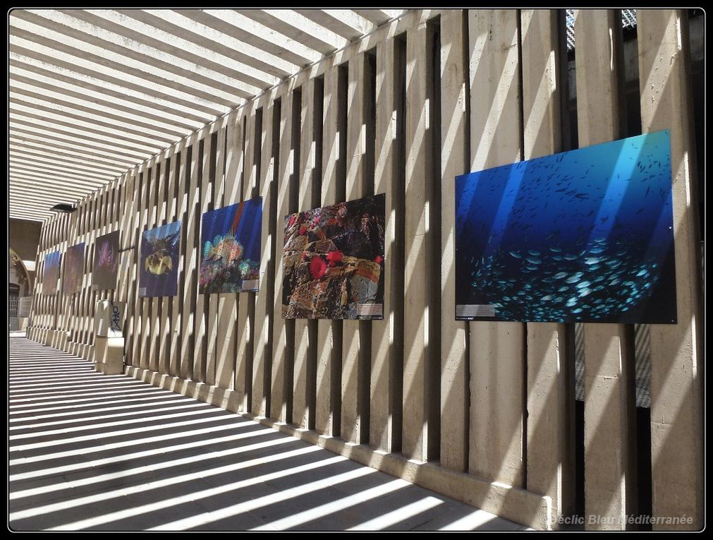 """Another """"in the street"""" exhibition of under water photographs, by Déclic Bleu Méditerranée."""