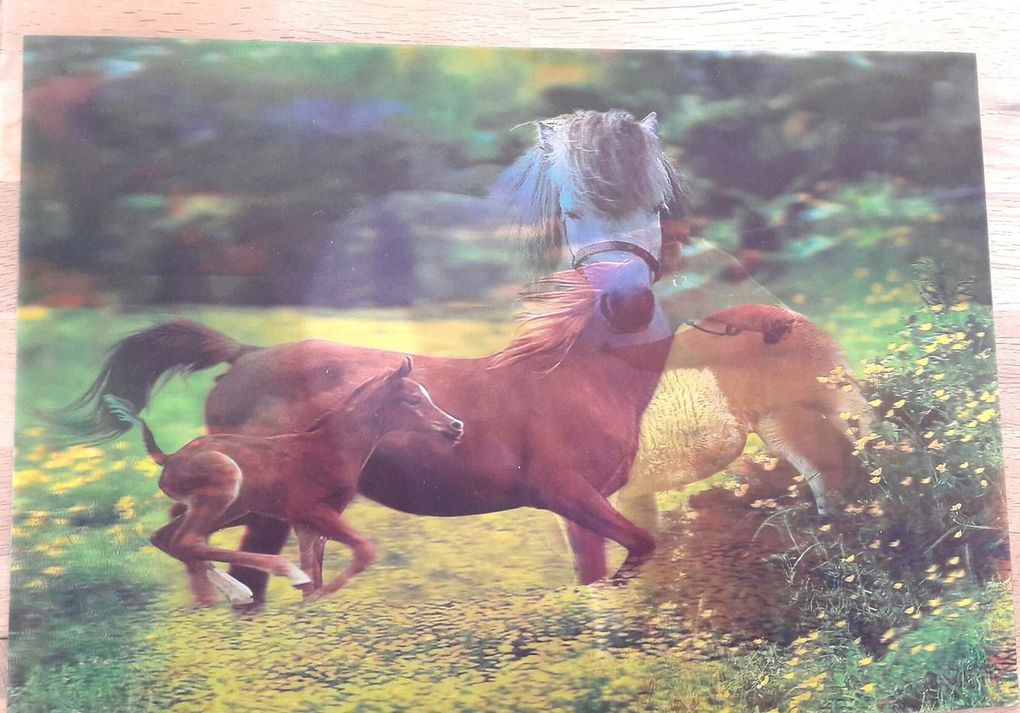 Passion des chevaux : set de table 3D, puzzle 3D