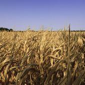 """""""Les cultivateurs bio ont profité de l'innovation génétique"""""""