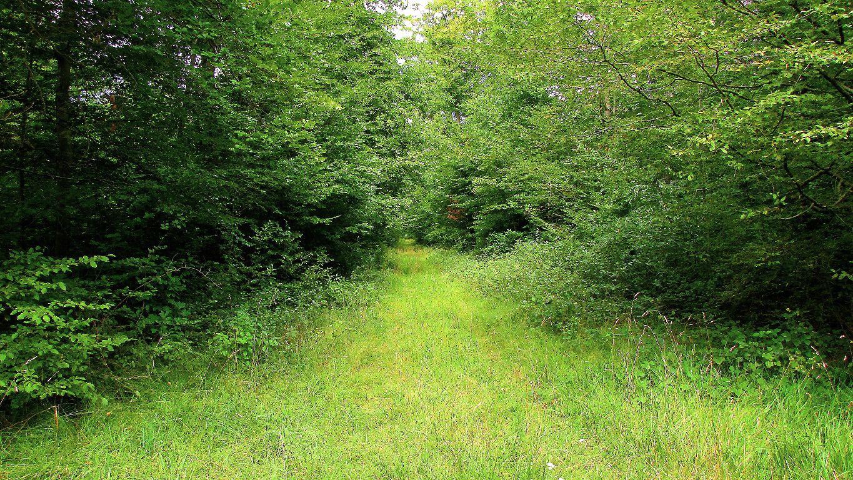 carrefour_Route d'Humières_Route de Choisy