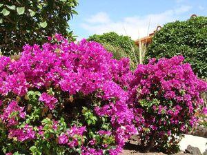SHERATON FUERTEVENTURA - îles Canaries