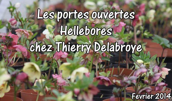 La visite des portes ouvertes Héllébores chez les Delabroye.