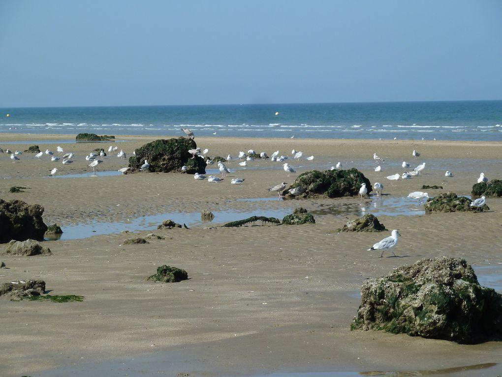 Sur la falaise, de magnifiques propriétés normandes profitent d'une vue magnifique sur la mer.