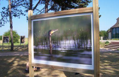 festival photo de l'estuaire de l'Orne 2011 - témoignages