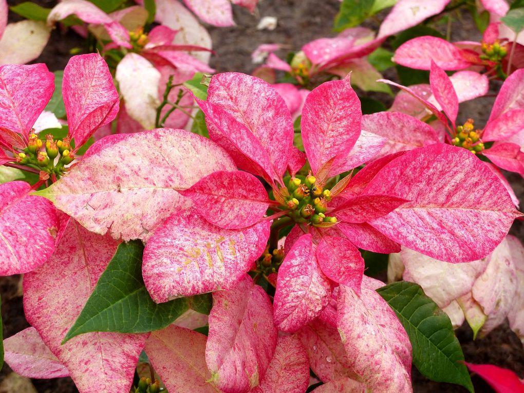 Fleurs du jour (21-03) - Au Phu Foi Lom (2)