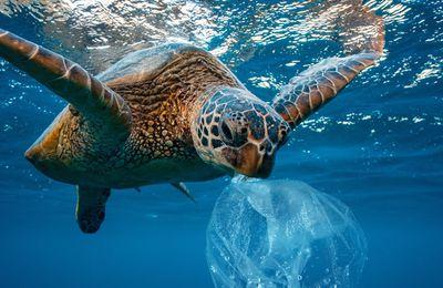 Rivalités et coopérations dans le partage, l'exploitation et la préservation des ressources des mers et des océans