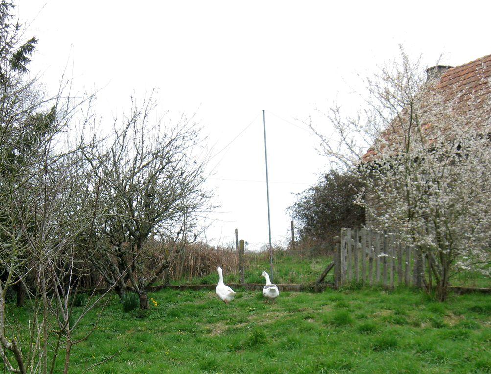 V'la l'printemps : les oiseaux chantent, les fleurs éclosent...