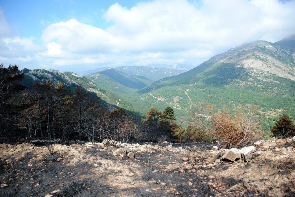 Triste et désolant ,quand en 2015 avec un fort vent ,le Col du Ferrier à brûlé .