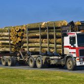 La Chine achète aussi les forêts françaises