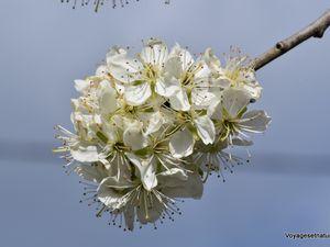 Fleurs d'avril...