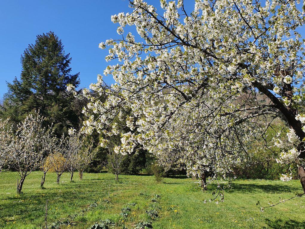 Dans les jardins de la Roche d'Or !...