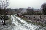 Lever du jour sous la neige