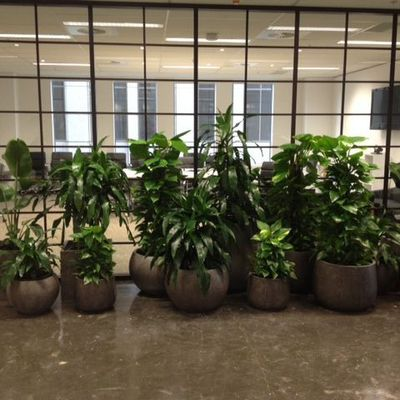 Make your place very fresh with plant hire Melbourne