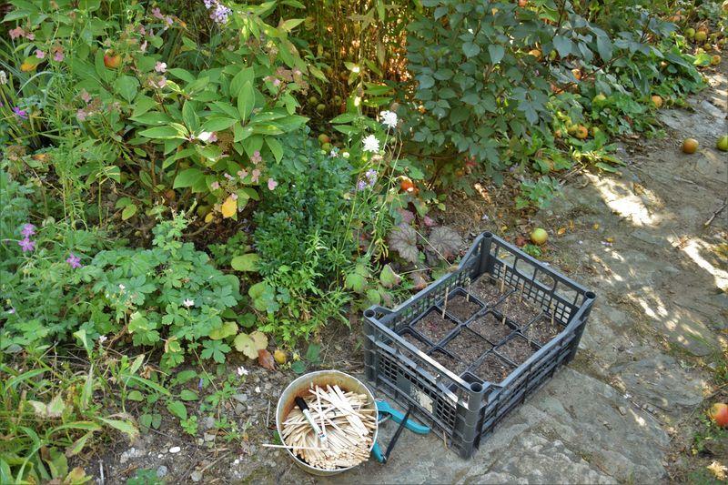 Des godets remplis de terreau, quelques étiquettes et un marqueur indélébile : voici mon petit matériel de campagne pour réaliser quelques semis rapides tout en travaillant au jardin.