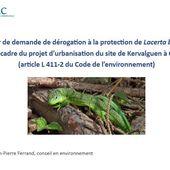 Projet de Kervalguen à Penhars : y'a un lézard ! Lacerta bilineata - Penhars Infos Quimper