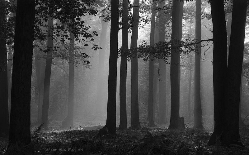 En noir et blanc ... essai