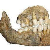 Homme de Néandertal : une analyse ADN sème le doute sur sa migration