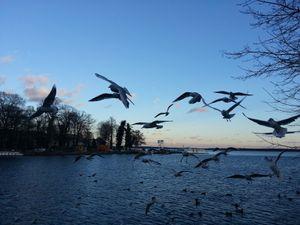 Quelques bouts de pain et une flopée d'oiseaux