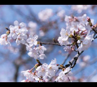AloeSylvie passe aux couleurs du printemps