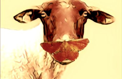 Le silence de l'agneau...