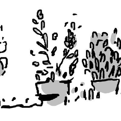 -bourgeonnement-