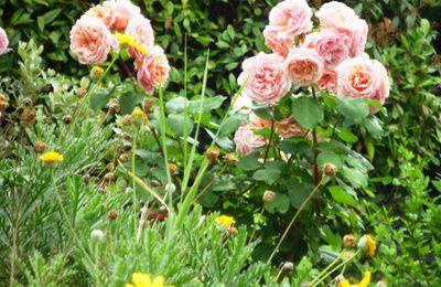 Le temps des fleurs