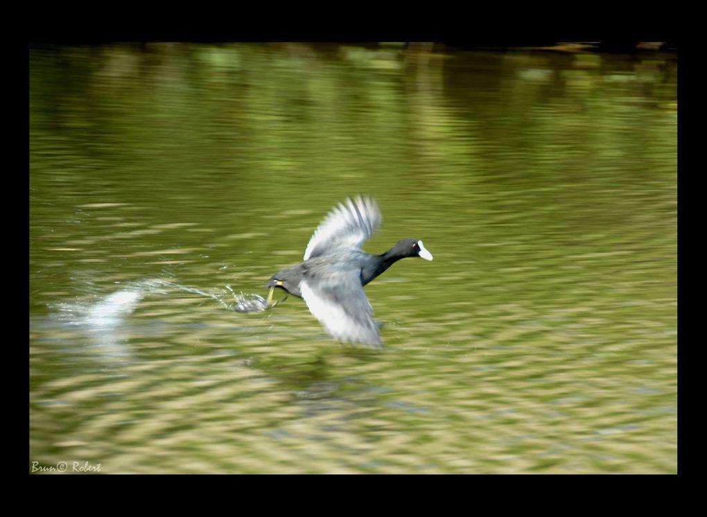Oiseaux, mais pas que !!!....