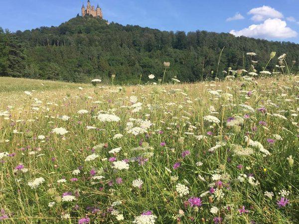 Le château de Hohezollern, avec vues imprenables sur le paysage souabe