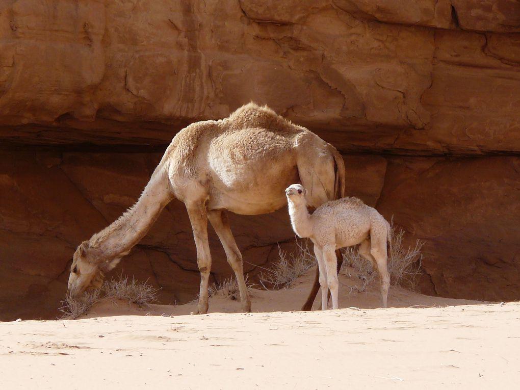 Trek en février = neige d'abord et froid en tous cas ... mais avec le vrai bonheur de marcher dans Petra sans touriste, d'humer le vent du Wadi Rum ...