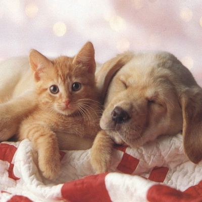 Chat+Chien=Amour