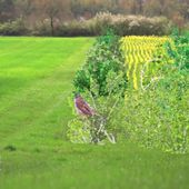 VIDEO. Quand la plaine regorgeait d'oiseaux... il y a seulement quinze ans