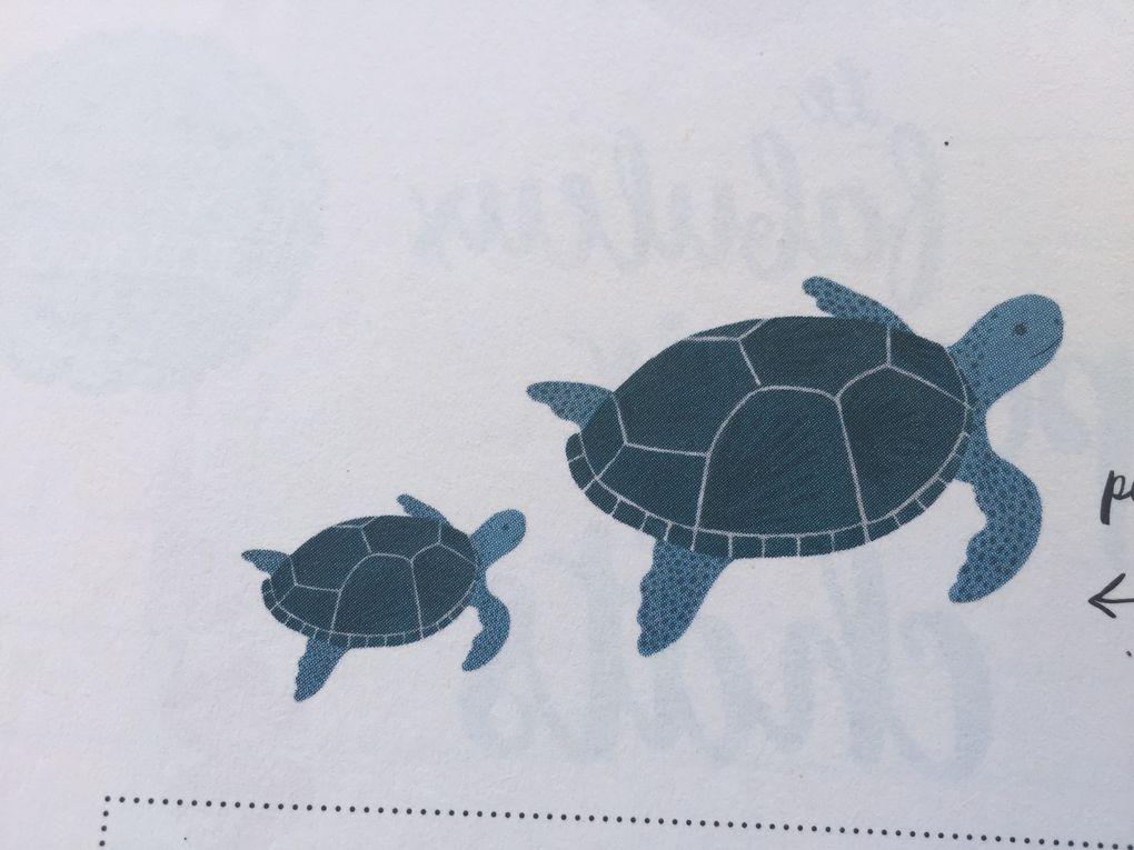 collection de tortues sur charlotteblabla blog