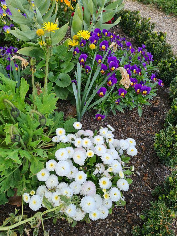 Weitere Fotos Frühjahrsblumen im Hofgarten