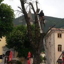 Saint André les Alpes: Le marronnier centenaire a quitté la place