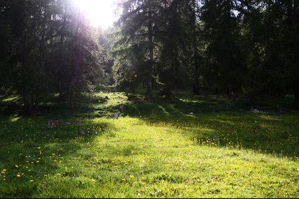 Oh belles forêts de France, vous n'êtes pas assez rentables, il va falloir défricher et rechiffrer ça !