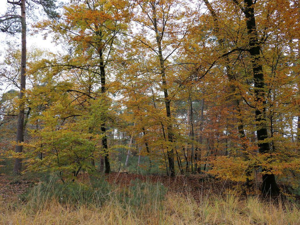 Randonnée en boucle de Veneux-Moret-les-Sablons - 15,53 km.