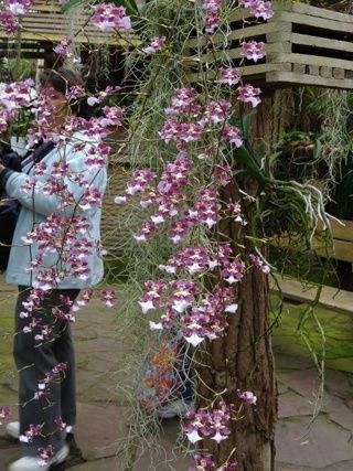 Orchideeën Hoeve